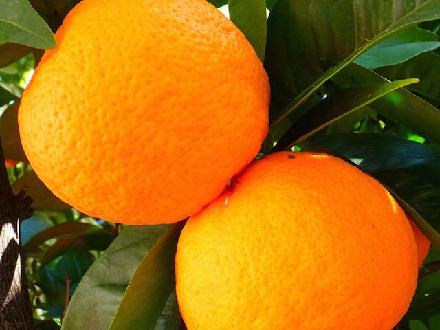 offer-alberi-da-frutta
