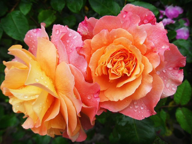 offer-fiori