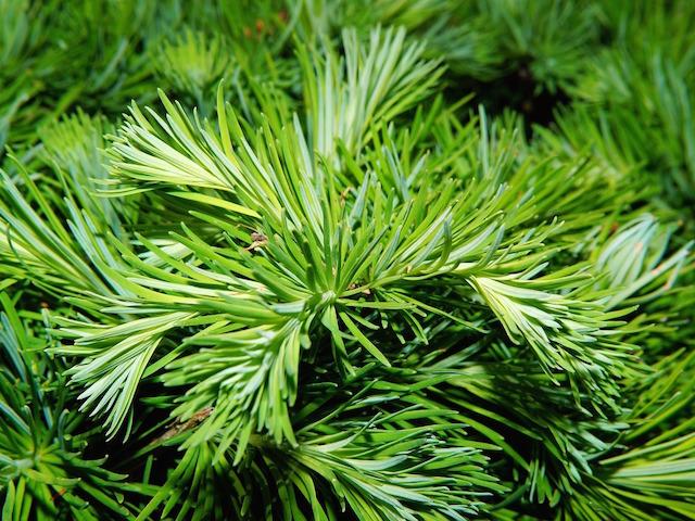 offer-alberi-di-natale