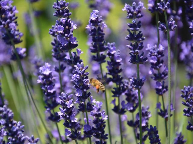 offer-piante-aromatiche