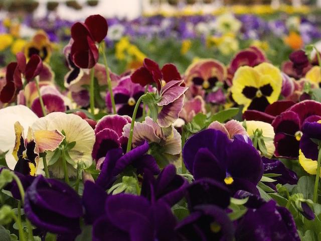offer-piante-stagionali